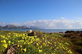 Weiter frühlingshaftes Wetter auf Mallorca