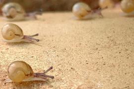 So zieht ein Mallorquiner 800.000 Schnecken-Babys groß