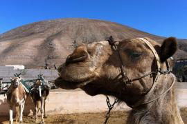 TV-Tipp: Zu Besuch auf Mallorca, Lanzarote und Gran Canaria