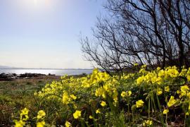 Deutlicher Temperaturrückgang auf Mallorca erwartet