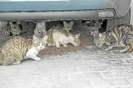 Streit auf Mallorca wegen streunenden Katzen in Bunyola