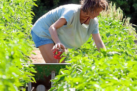 Landwirte erzeugen 15 Prozent der auf der Insel konsumierten Produkte