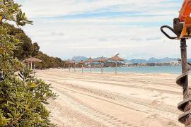 Erste Sonnenschirme am Strand von Alcúdia aufgebaut