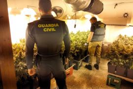 Mehr als 400 Marihuana-Pflanzen in einer Wohnung in Arenal entdeckt