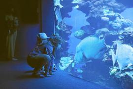 Nach 8 Monaten: Palma Aquarium wieder geöffnet