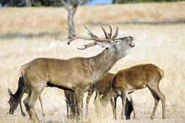 Erstausstrahlung im TV: Spanische Hirsche haben Bedürfnisse