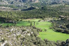 In diesen Gemeinden auf Mallorca steigt die Einwohnerzahl besonders stark