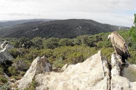 TV-Tipp: Den Geiern von Mallorca auf der Spur