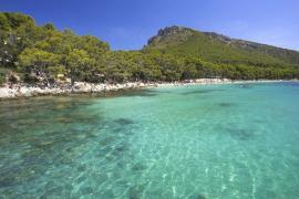 Noch immer keine Mietliegen und Schirme auf dem berühmten Formentor-Strand