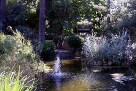 Ein tropischer Garten auf Mallorca