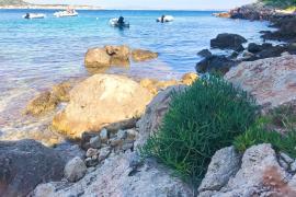 Dieser krautige Gaumenkitzel wächst an Mallorcas Küsten