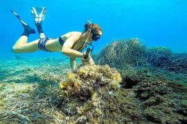 Die Unterwasserförster von Mallorca