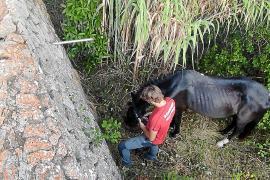 Pferd auf Mallorca in Sturzbach gefallen