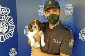 Neue Kameradin bei der Nationalpolizei in Palma