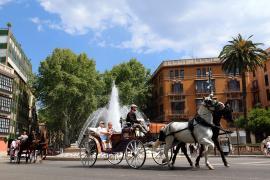 Tierschützer kämpfen auf Mallorca fürs Wohl der Pferde