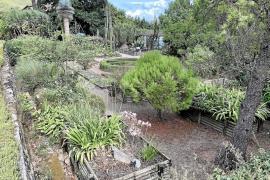 Im Botanischen Garten in Sóller lässt sich das ganze Jahr über einheimische Fauna anschauen.