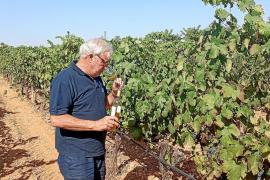 Mallorca-Wein der Bodega José L. Ferrer ausgezeichnet