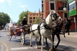 Pferdekutschen in Palma: Ein Streit, der nie endet