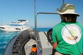 Seegrasschutz: Tausende Schiffe mussten umparken