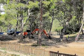 733 Bäume im Bellver-Park in Palma abgestorben