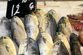 Mallorcas Lieblingsfisch