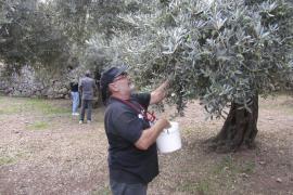 Schlechte Aussichten für Olivenernte