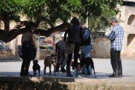 Kampfhunde im Visier