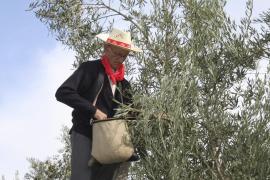 Olivenöl aus Mallorca stark gefragt