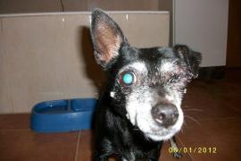 Schwer misshandelter Hund gefunden