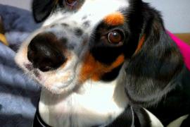 balou perro facebook
