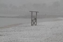 palma nevada en palma foto joan torres
