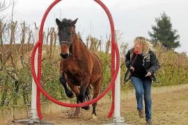 """Corinna Ertl zeigt Horse Agility: Das Pferd springt alleine durch das """"Eulennest""""."""
