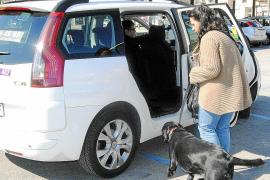 Bisher hatten Hundebesitzer hin und wieder Schwierigkeiten, ein Taxi zu finden. Das soll sich nun endgültig ändern.