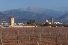 Neuer Wanderweg durch Mallorcas Herzland