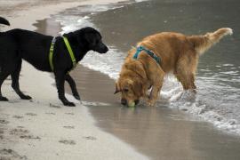 Hunde am Strand: Auf Mallorca eigentlich nicht erlaubt.