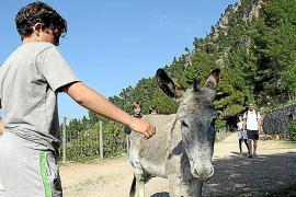 Tierische Begegnung: Der Esel ist auf den Proviant der Spaziergänger aus.