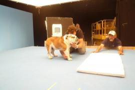 "Die Bulldogge ""Chopped"" bei den Dreharbeiten."