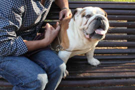 """Bulldogge """"Chopped"""" mit Herrchen Aitor Pérez."""