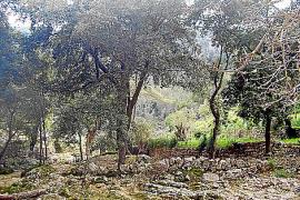 Zerklüftete Felsen am Bachbett, gesäumt von Eichen und Erlen.