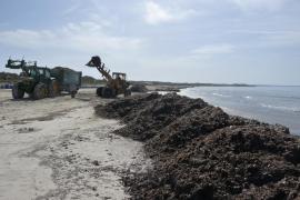 Umweltschützer kritisieren Strandreinigung in Sa Rápita