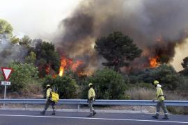 Das Feuer kam der Manacor-Landstraße bedrohlich nahe.