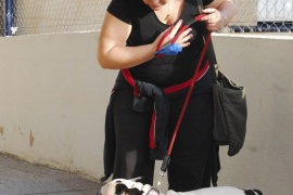 Neue Hundeverordnung in Artà