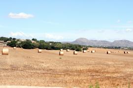 Mallorca-Wetter: Weiter mit heiter