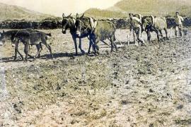 Traditionelle Landwirtschaft auf den Balearen.