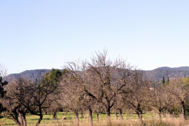 Landschaft bei Consell am Freitagvormittag.