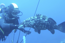 Alexandra Cousteau macht sich für Cabrera stark