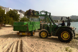 Aufräumarbeiten an der Playa von Pollença.