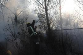 Erster Waldbrand des Jahres gelöscht