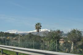 Palmenwipfel vor verschneiten Berggipfeln, gesehen am Freitag von der Autobahn Inca-Sa Pobla aus.