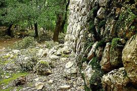 Der Weg führt durch den größten Eichenwald der Insel.